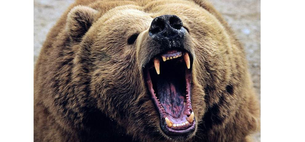 bear attacked on a man in chamoli