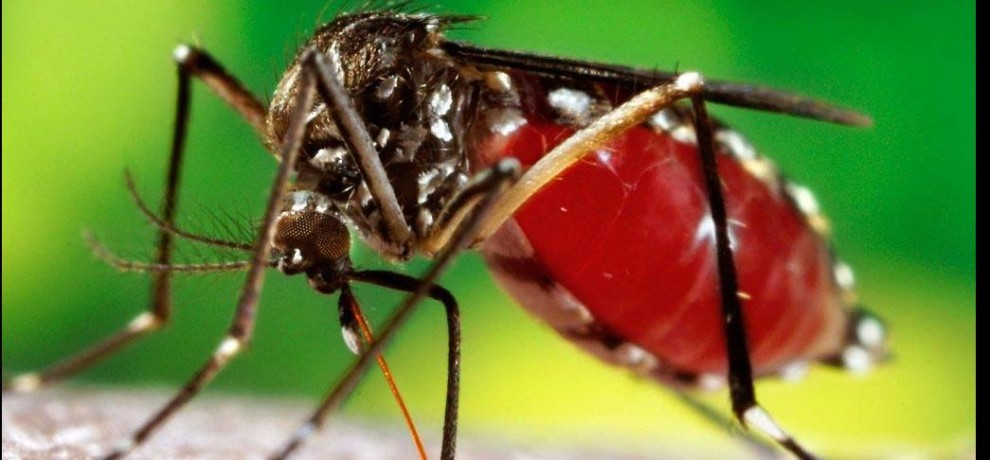 47 dengue infected in mathura