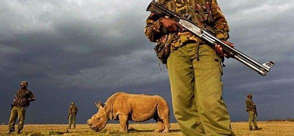 world's last surviving male northern white rhino