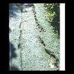pedestrain path