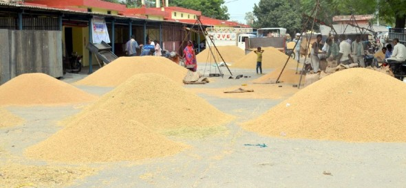 purchasing of paddy opened nine centres