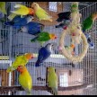 Himachal govt going to ban to keep birds in cages