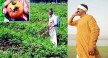 good news for farmers crop diseases get rid of this website