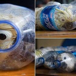 जिंदा पक्षियों को बोतल में ठूंसकर ऐसे की जाती है तस्करी