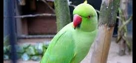 Parrot says extra marital story of his owner