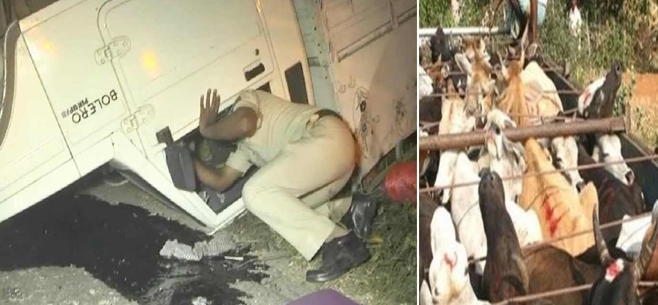 Cow smuggler, Kalanaur outpost, firing on cow protection team members