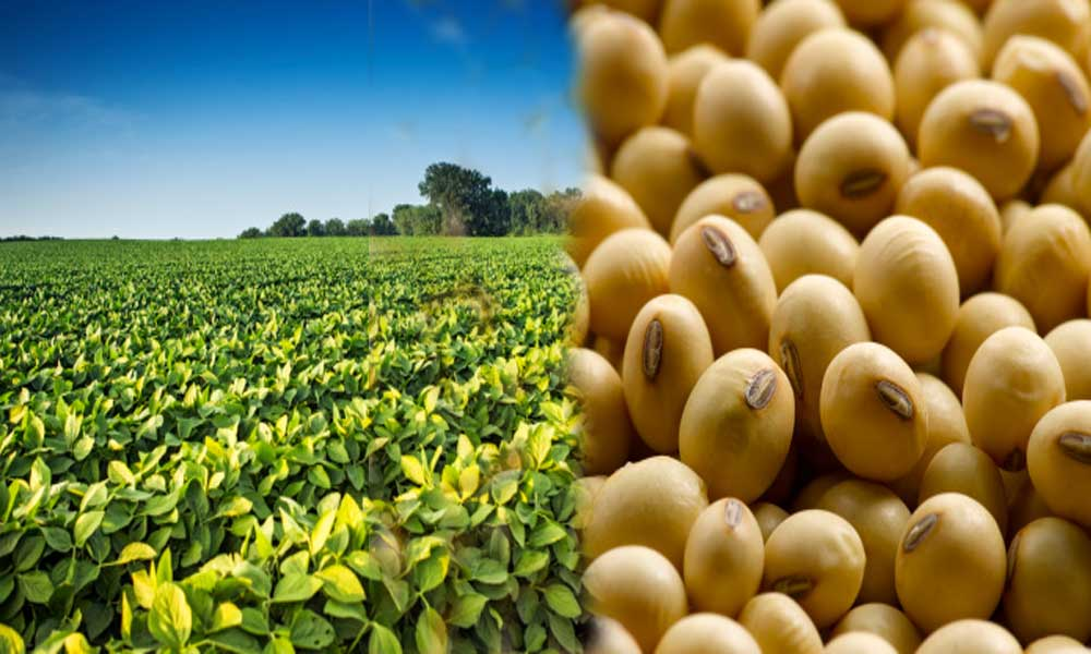 five health benefits of Soybean