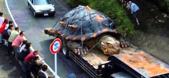 Giant Turtle found in Japan