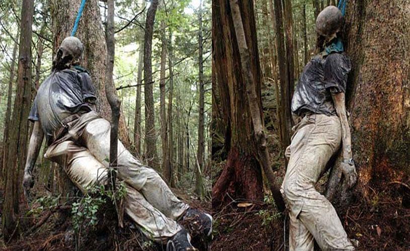 Aokigahara Forest Japan's Favourite Suicide Point - इस जंगल में मौत को गले  लगाने जाते हैं लोग, पेड़ों पर लटकती हैं लाशें - Amar Ujala Hindi News Live