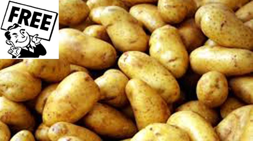 Get free potatoes from cold storage