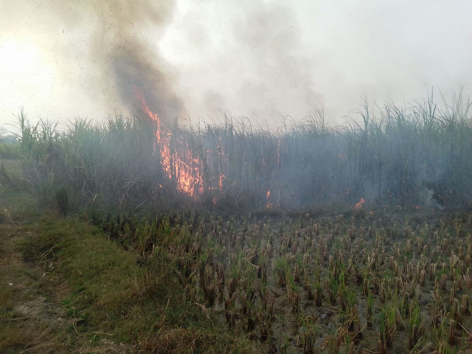 Wire fire broke out in the sugarcane
