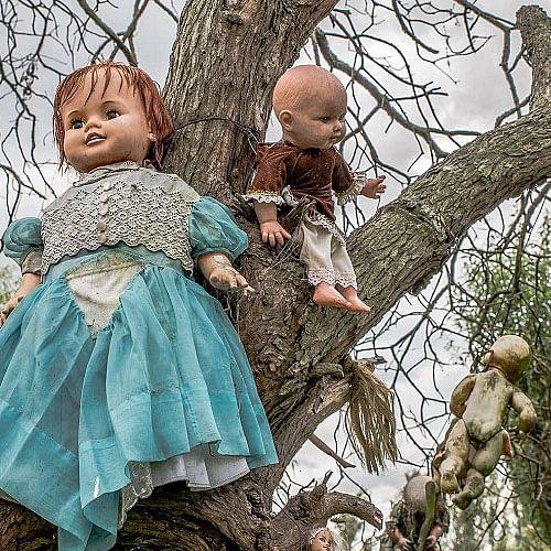 Mexico's Island Of Dolls Creepiest Place On Earth - यहां पेड़ों से लटकी हैं  लाखों गुड़िया, रात को करती हैं बातें - Amar Ujala Hindi News Live