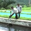 Fish brood bank project launched for unemployed youth in Rajouri JAMMU KASHMIR