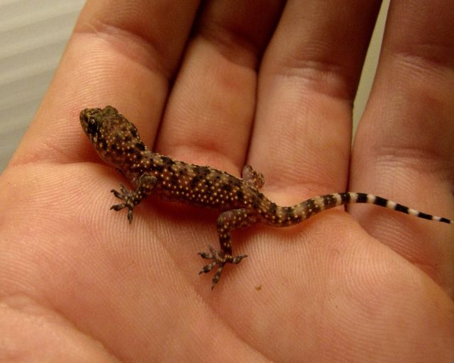 Meaning Of Lizard Falling On Body Parts - किस दिन और