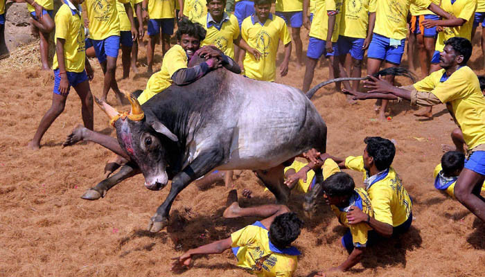 Supreme Court refuses to pass interim order on Jallikattu ban before Pongal