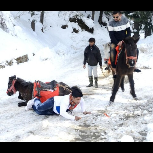 funny pictures in heavy snowfall in himachal