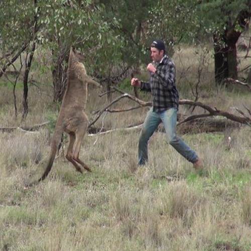 Man Slaps Kangaroo To Save His Pet Dog