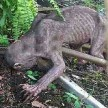 Alien Like Creature Found In Indonesian Village