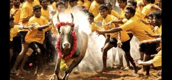 know here why jallikattu is so close to the people of tamilnadu