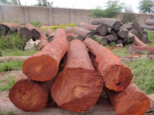 smuggled sandal wood consumption in kannauj up