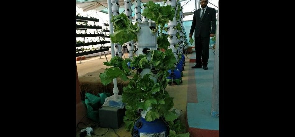 Without soil, chemical pesticides and fertilizers vegetables cultivated only by water