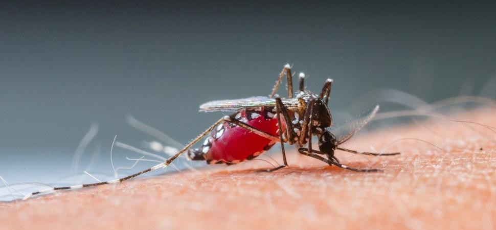 New malaria vaccine is 'Hundred percent protective'