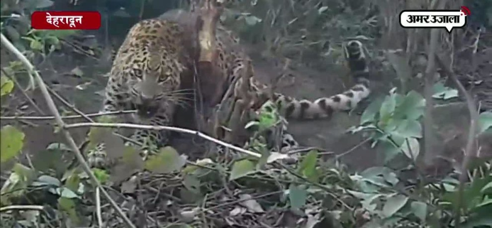 Rescue Operation of Leopard in dehradun