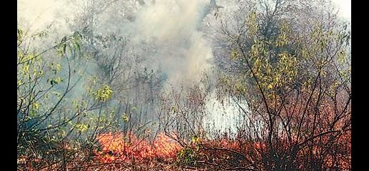 Kalinjar Fort forest fire
