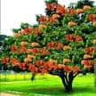 Benefits Of Ashoka Tree In Jyotish And Shastra