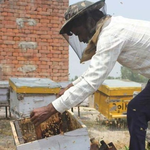 watch honey village in photos, whose farmers earn millions in one month by business of bees honey
