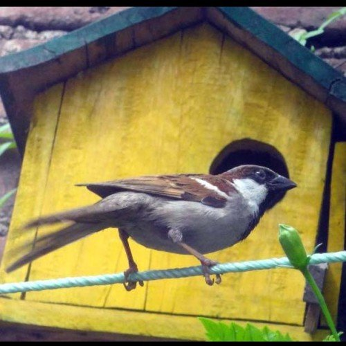 world sparrow day story