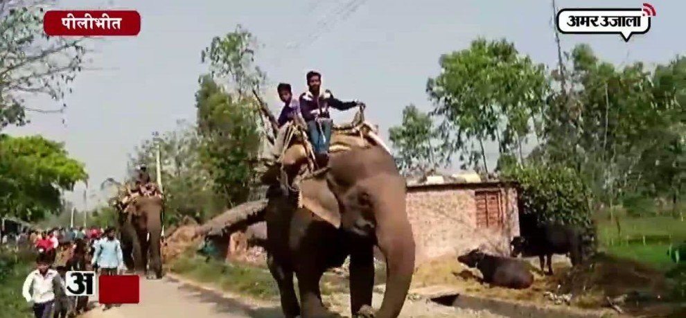 ELEPHANT STRAY IN PILIBHIT AGAIN, IN PROTECTION OF VILLAGERS