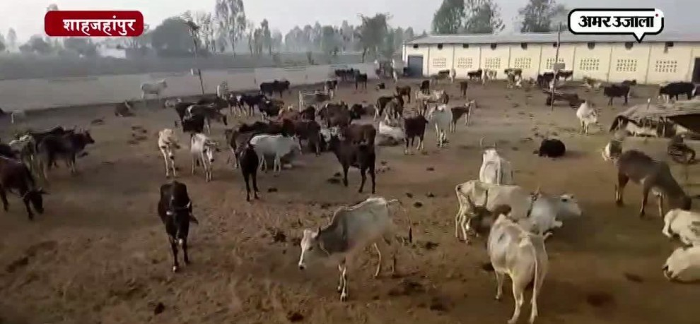 Bad condition of cowshed in shahjahanpur