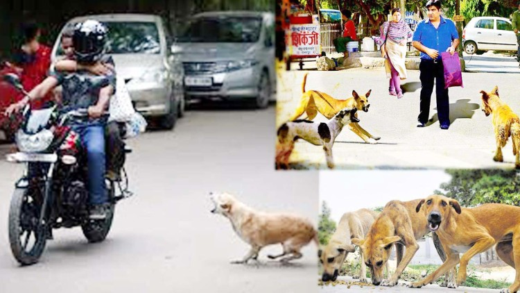 Street Dogs Are Dangerous In Kanpur - अचानक