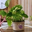 vaastu tips for money plants