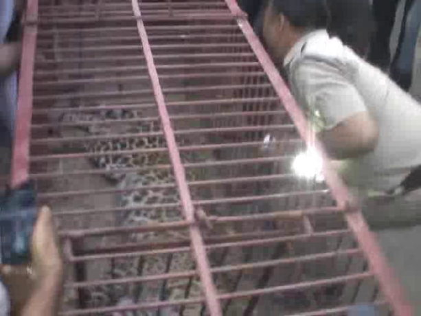rescue operation for leopard in ghaziabad