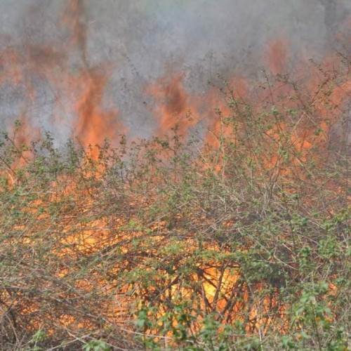 A fierce fire in the forests of Sauda Saroli