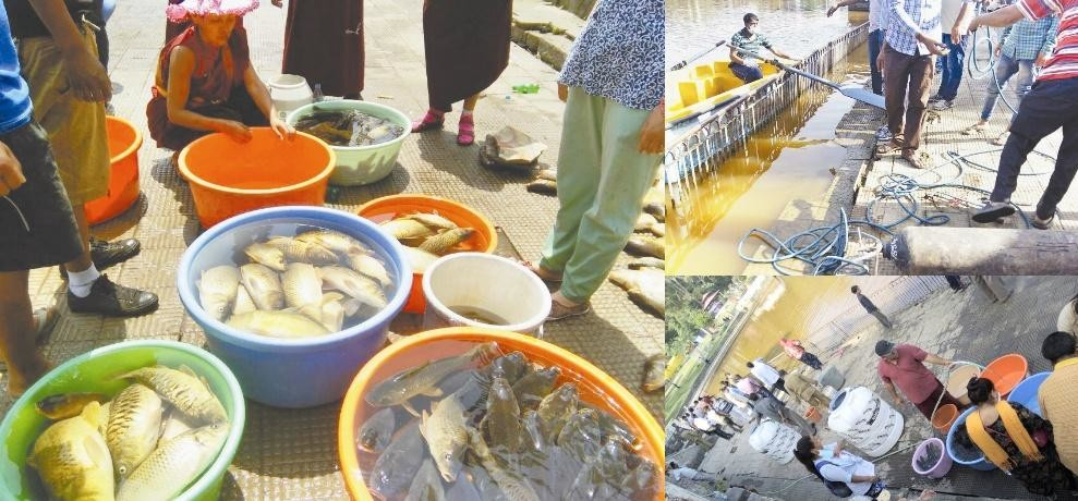 Hundreds of fish dying in Rewalsar lake Mandi Himachal Pradesh