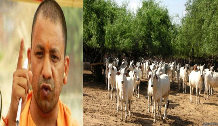 yogi goverment comment on cow shed