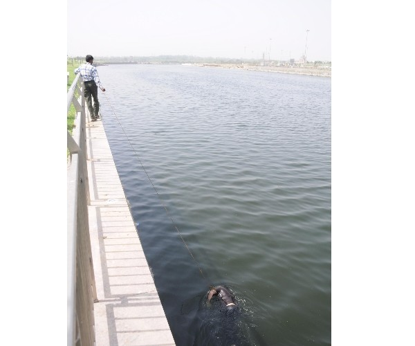 Couple who married in temple then jump into yamuna river in allahabad