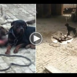 Rottweiler dog killed his care taker in Panipat