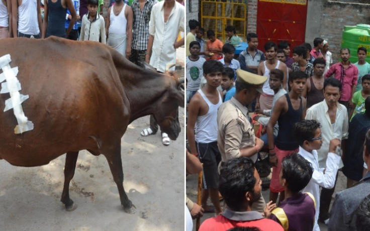 ruckus after hurting cows and dogs in lucknow