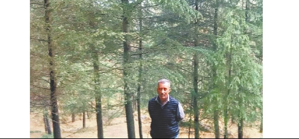 The Man Who Has Planted ten thousand deodar tree on his own land
