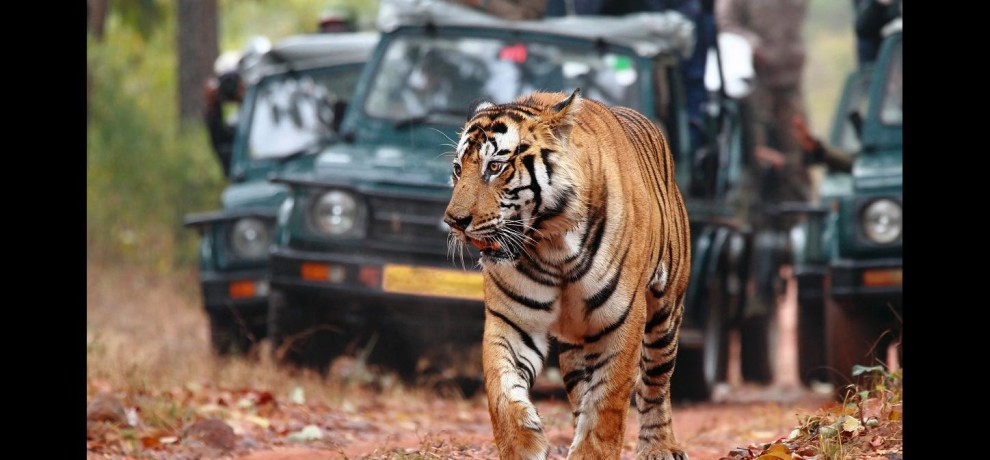 jungle safari will not stop in rainy season also in rajasthan