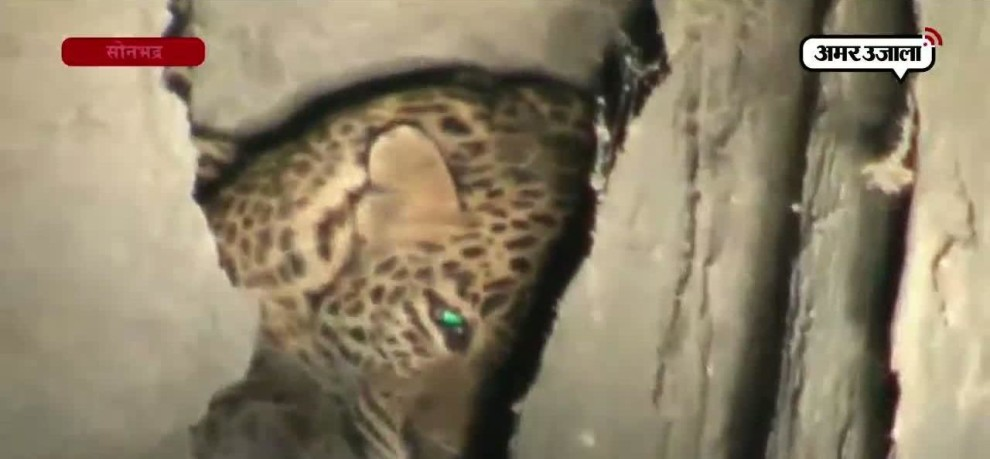 A LEOPARD ATTACKED ON A PERSON IN SONBHADRA