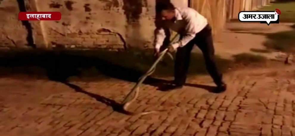 WATCH- 7-FEET LONG SNAKE CAUGHT BY ALLAHABAD UNIVERSITY PROFESSOR