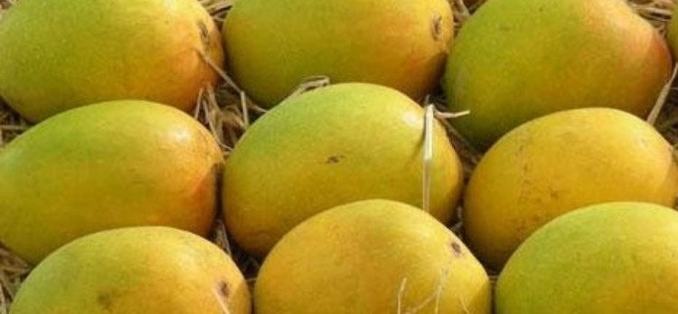 Know About Your Dream Meaning When You See Fruits In Dreams