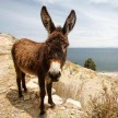 Donkey gang raped allegedly by 15 teens in Morocco later found to be rabies infected