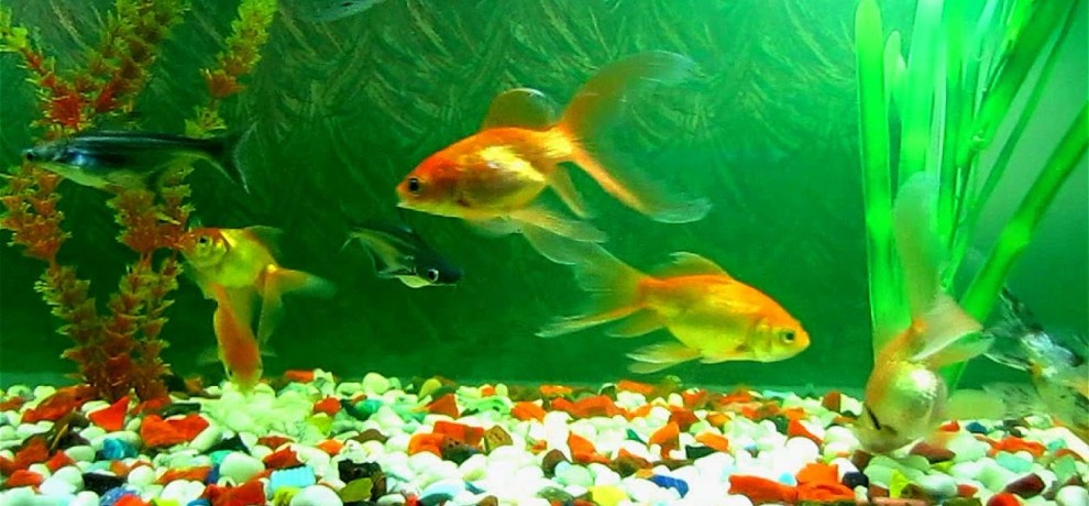 according to feng shui what is the best place of aquarium in home