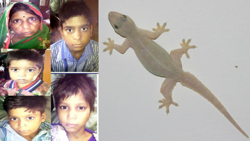 Lizard boiled with Milk five ill